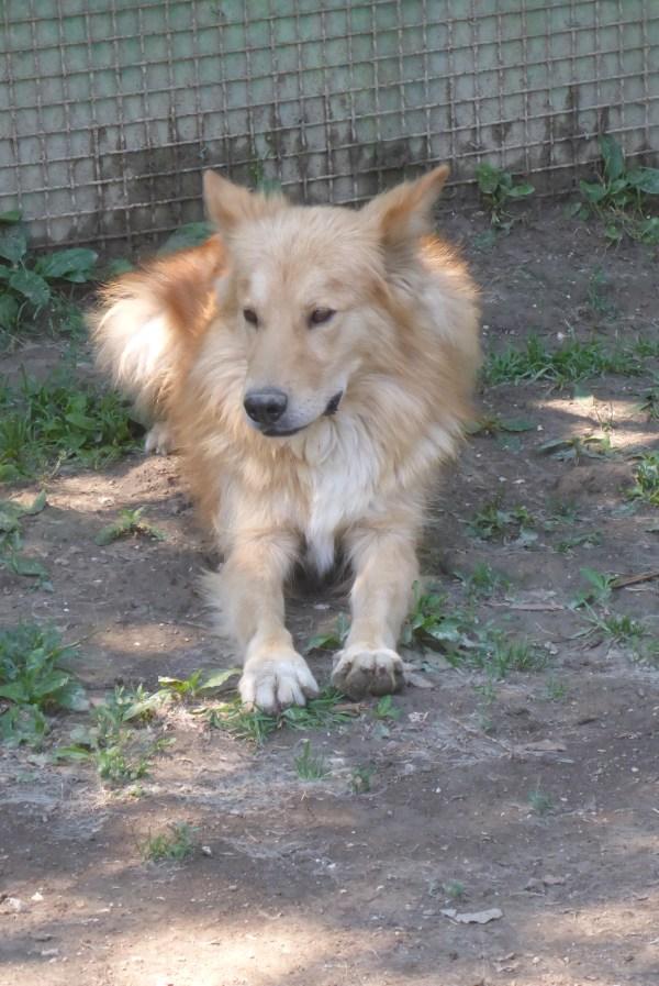 Bildertagebuch - Varenne, neugieriger wunderschöner Hundejunge freut sich sehr über Leckerchen ... Ist über einer anderen Orga VERMITTELT worden!! 24700903kd