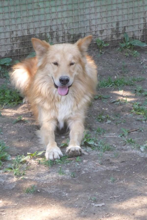 Bildertagebuch - Varenne, neugieriger wunderschöner Hundejunge freut sich sehr über Leckerchen ... Ist über einer anderen Orga VERMITTELT worden!! 24700904ke