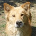 Bildertagebuch - Varenne, neugieriger wunderschöner Hundejunge freut sich sehr über Leckerchen ... Ist über einer anderen Orga VERMITTELT worden!! 24700909fr