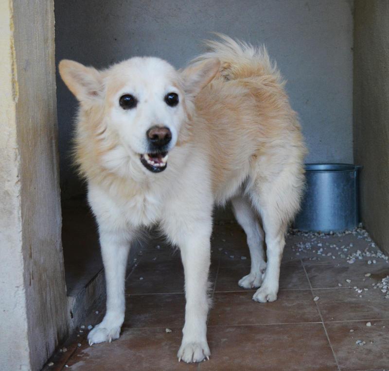 Bildertagebuch -  Bianco: grausam misshandelt sucht Hundeprofis denen er vertrauen kann - VERMITTELT - 24808008ut