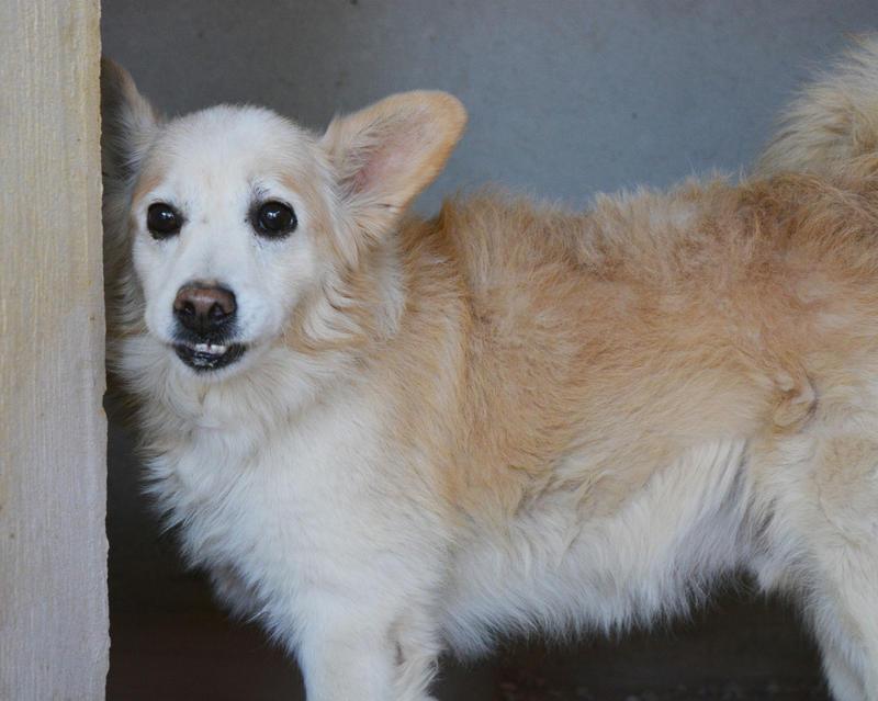 Bildertagebuch -  Bianco: grausam misshandelt sucht Hundeprofis denen er vertrauen kann - VERMITTELT - 24808011nz