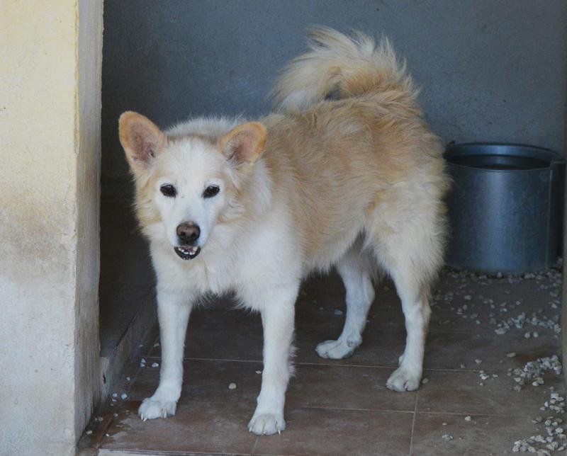 Bildertagebuch -  Bianco: grausam misshandelt sucht Hundeprofis denen er vertrauen kann - VERMITTELT - 24808012mq