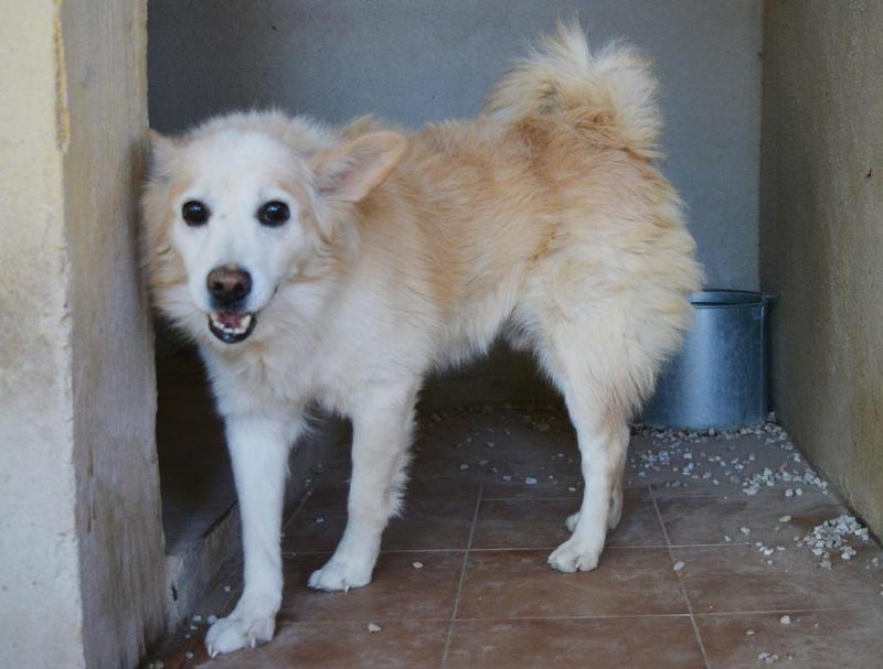 Bildertagebuch -  Bianco: grausam misshandelt sucht Hundeprofis denen er vertrauen kann - VERMITTELT - 24808015ao