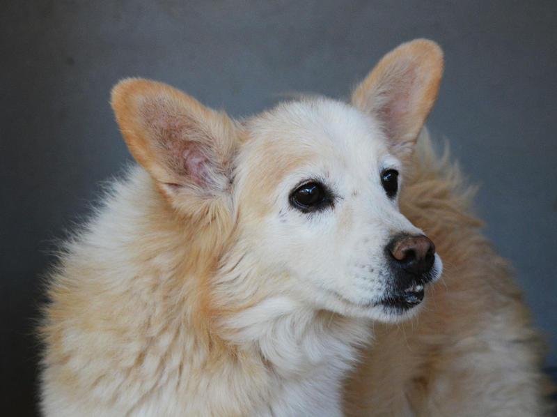 Bildertagebuch -  Bianco: grausam misshandelt sucht Hundeprofis denen er vertrauen kann - VERMITTELT - 24808016fn
