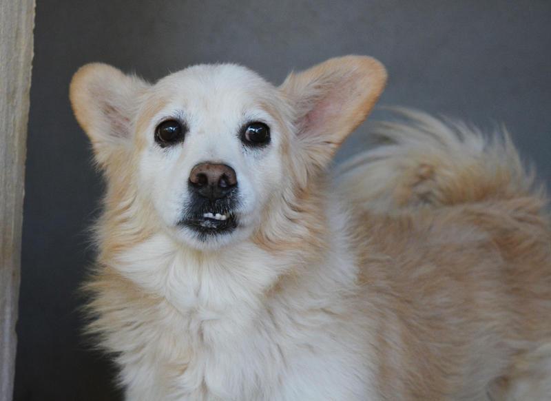 Bildertagebuch -  Bianco: grausam misshandelt sucht Hundeprofis denen er vertrauen kann - VERMITTELT - 24808017mz