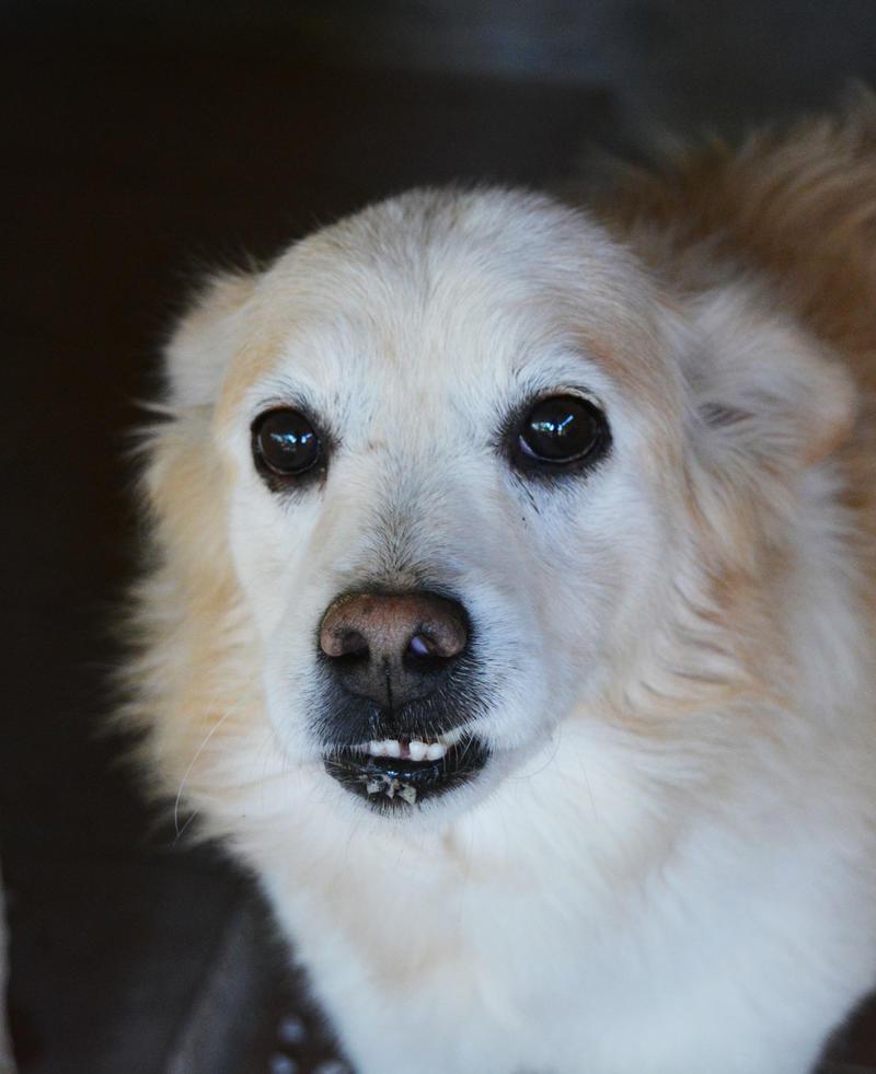 Bildertagebuch -  Bianco: grausam misshandelt sucht Hundeprofis denen er vertrauen kann - VERMITTELT - 24808067bb