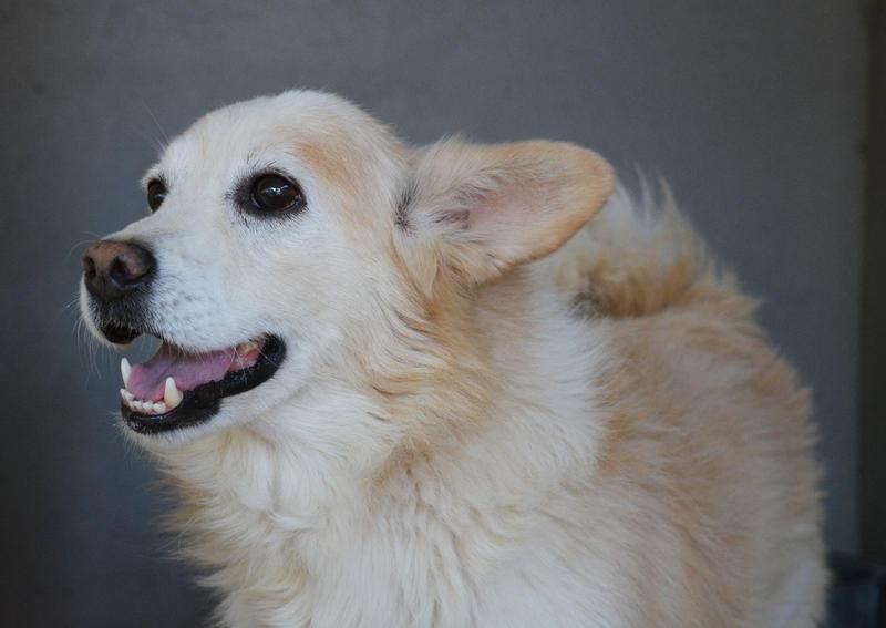 Bildertagebuch -  Bianco: grausam misshandelt sucht Hundeprofis denen er vertrauen kann - VERMITTELT - 24808068fz