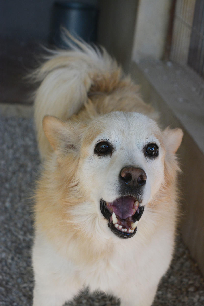 Bildertagebuch -  Bianco: grausam misshandelt sucht Hundeprofis denen er vertrauen kann - VERMITTELT - 24808073iz