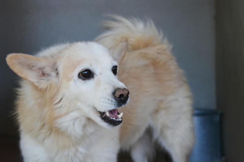 Bildertagebuch -  Bianco: grausam misshandelt sucht Hundeprofis denen er vertrauen kann - VERMITTELT - 24808074nv