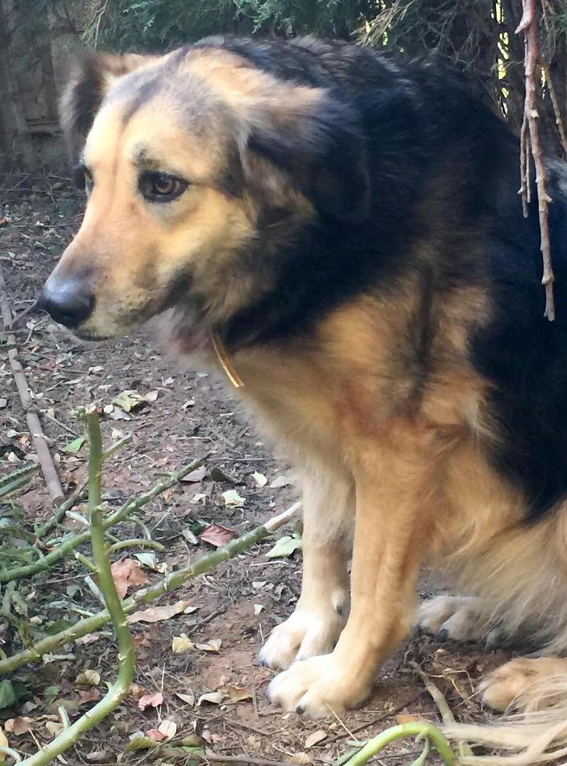Bildertagebuch - Lolita, ist eine ganz liebe Hundedame mit viel Liebe taut sie schnell auf ...Hat Ihr ZUHAUSE in Spanien GEFUNDEN!!! 24904370ze
