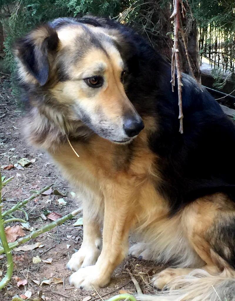 Bildertagebuch - Lolita, ist eine ganz liebe Hundedame mit viel Liebe taut sie schnell auf ...Hat Ihr ZUHAUSE in Spanien GEFUNDEN!!! 24904371ea