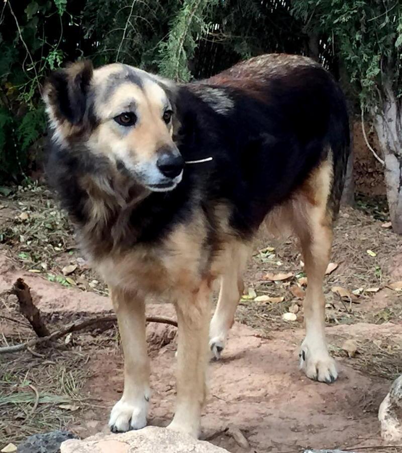 Bildertagebuch - Lolita, ist eine ganz liebe Hundedame mit viel Liebe taut sie schnell auf ...Hat Ihr ZUHAUSE in Spanien GEFUNDEN!!! 24904372kq
