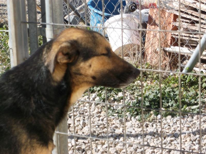 Bildertagebuch - Alberto, ein ganz freundlicher Hundejunge der sich noch so über jeden kleinen Krauler freut ... er wartet schon so lange auf ein Sofa!!! - in Belgien ZUHAUSE GEFUNDEN! 24938737nv