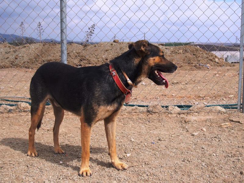 Bildertagebuch - Alberto, ein ganz freundlicher Hundejunge der sich noch so über jeden kleinen Krauler freut ... er wartet schon so lange auf ein Sofa!!! - in Belgien ZUHAUSE GEFUNDEN! 24938740sk