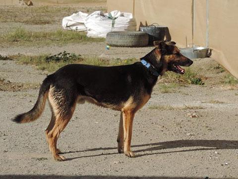 Bildertagebuch - Alberto, ein ganz freundlicher Hundejunge der sich noch so über jeden kleinen Krauler freut ... er wartet schon so lange auf ein Sofa!!! - in Belgien ZUHAUSE GEFUNDEN! 24938785sw