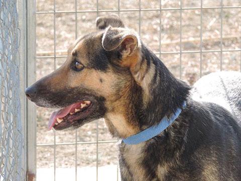 Bildertagebuch - Alberto, ein ganz freundlicher Hundejunge der sich noch so über jeden kleinen Krauler freut ... er wartet schon so lange auf ein Sofa!!! - in Belgien ZUHAUSE GEFUNDEN! 24938786mn