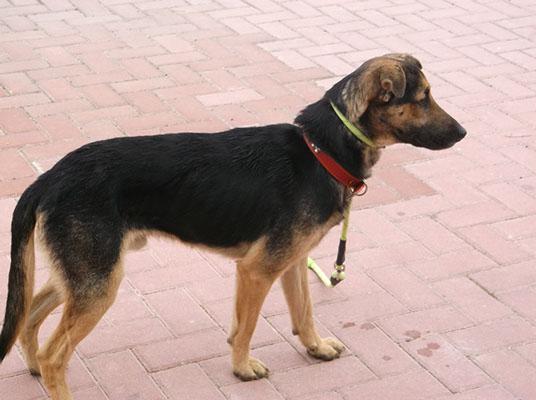Bildertagebuch - Alberto, ein ganz freundlicher Hundejunge der sich noch so über jeden kleinen Krauler freut ... er wartet schon so lange auf ein Sofa!!! - in Belgien ZUHAUSE GEFUNDEN! 24938787yn