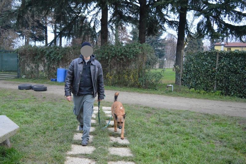 Bildertagebuch - Nerone, ein Traum auf vier Pfoten der mit seiner Familie durch die Natur streifen möchte ...über ANDERE ORGA ZUHAUSE GEFUNDEN 24993696ml