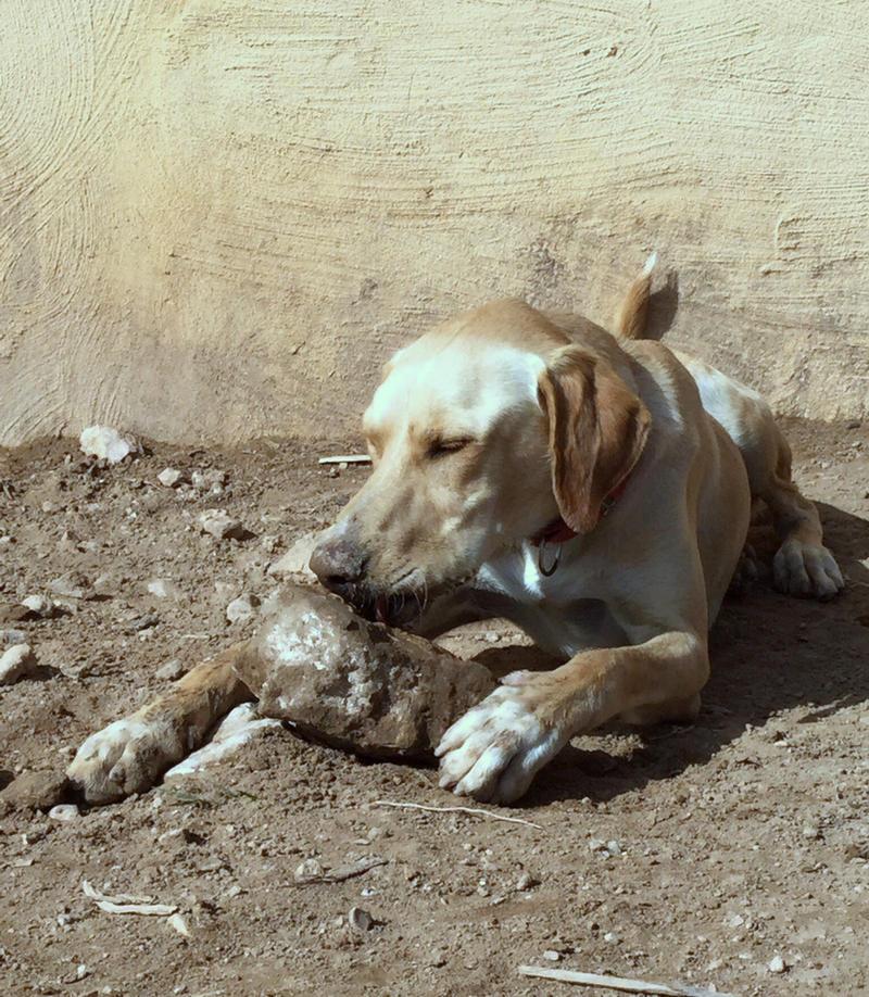 Bildertagebuch - BUSTER, ein Traumhund wurde streunend aufgefunden - VERMITTELT - 24994118hb