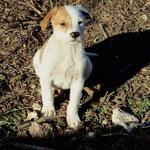 Bildertagebuch -  Bandit:  schüchterer, gutaussehender Hundejunge sucht sein Zuhause - wird über eine andere Orga vermittelt!!! 25122326tk