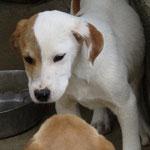 Bildertagebuch -  Bandit:  schüchterer, gutaussehender Hundejunge sucht sein Zuhause - wird über eine andere Orga vermittelt!!! 25122328km