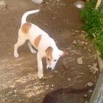 Bildertagebuch -  Bandit:  schüchterer, gutaussehender Hundejunge sucht sein Zuhause - wird über eine andere Orga vermittelt!!! 25122329ze