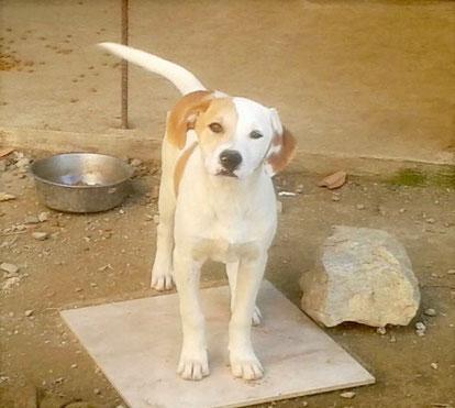Bildertagebuch -  Bandit:  schüchterer, gutaussehender Hundejunge sucht sein Zuhause - wird über eine andere Orga vermittelt!!! 25122330jy