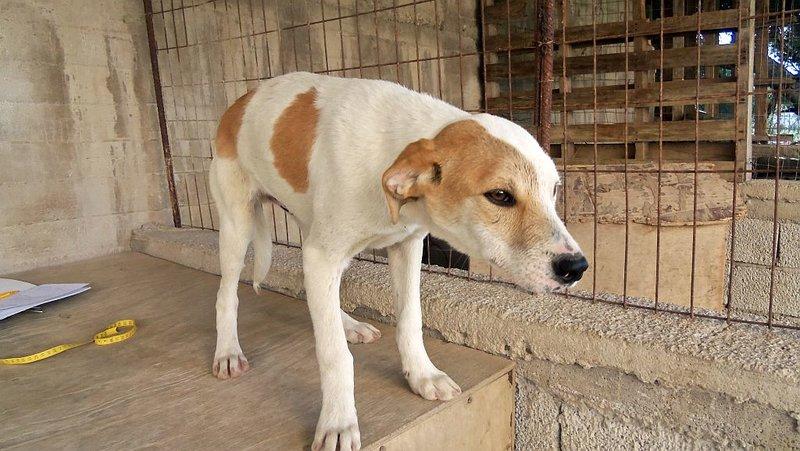 Bildertagebuch -  Bandit:  schüchterer, gutaussehender Hundejunge sucht sein Zuhause - wird über eine andere Orga vermittelt!!! 25122335jy
