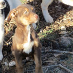 Bildertagebuch -  Baxter: neugieriger, verspielter, lieber , sehr süßer Hundejunge sucht Menschen mit Feingefühl! - wird über andere Orga vermittelt 25122442al