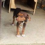 Bildertagebuch -  Baxter: neugieriger, verspielter, lieber , sehr süßer Hundejunge sucht Menschen mit Feingefühl! - wird über andere Orga vermittelt 25122443wd