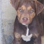 Bildertagebuch -  Baxter: neugieriger, verspielter, lieber , sehr süßer Hundejunge sucht Menschen mit Feingefühl! - wird über andere Orga vermittelt 25122444wd