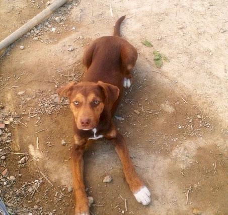 Bildertagebuch -  Baxter: neugieriger, verspielter, lieber , sehr süßer Hundejunge sucht Menschen mit Feingefühl! - wird über andere Orga vermittelt 25122445fi