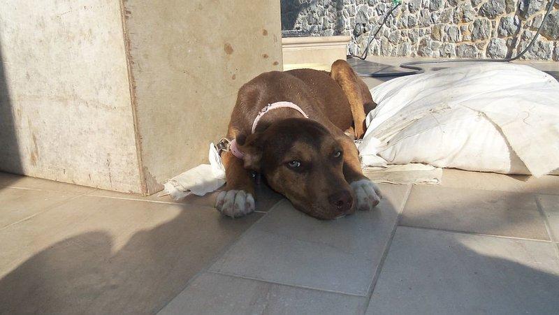 Bildertagebuch -  Baxter: neugieriger, verspielter, lieber , sehr süßer Hundejunge sucht Menschen mit Feingefühl! - wird über andere Orga vermittelt 25122449qj