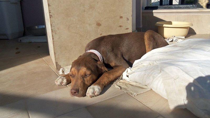 Bildertagebuch -  Baxter: neugieriger, verspielter, lieber , sehr süßer Hundejunge sucht Menschen mit Feingefühl! - wird über andere Orga vermittelt 25122450lb