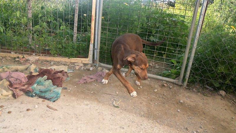 Bildertagebuch -  Baxter: neugieriger, verspielter, lieber , sehr süßer Hundejunge sucht Menschen mit Feingefühl! - wird über andere Orga vermittelt 25122451uy
