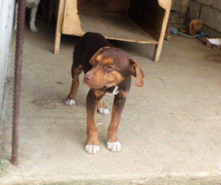 Bildertagebuch -  Baxter: neugieriger, verspielter, lieber , sehr süßer Hundejunge sucht Menschen mit Feingefühl! - wird über andere Orga vermittelt 25122514lo