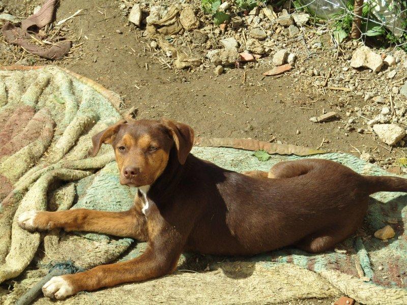 Bildertagebuch -  Baxter: neugieriger, verspielter, lieber , sehr süßer Hundejunge sucht Menschen mit Feingefühl! - wird über andere Orga vermittelt 25122515ev