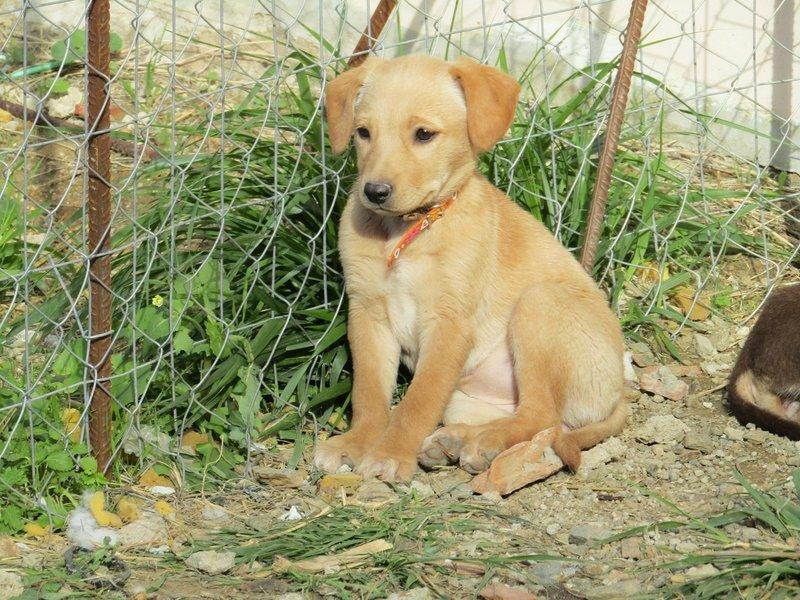 Bildertagebuch -  Belle:  junges,  aufgeschlossenes, hübsches Hundemädchen sucht aktive Familie! - in Griechenland ZUHAUSE GEFUNDEN! 25122586dv