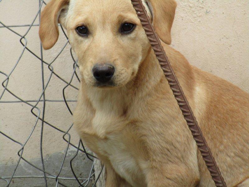 Bildertagebuch -  Belle:  junges,  aufgeschlossenes, hübsches Hundemädchen sucht aktive Familie! - in Griechenland ZUHAUSE GEFUNDEN! 25122587tq