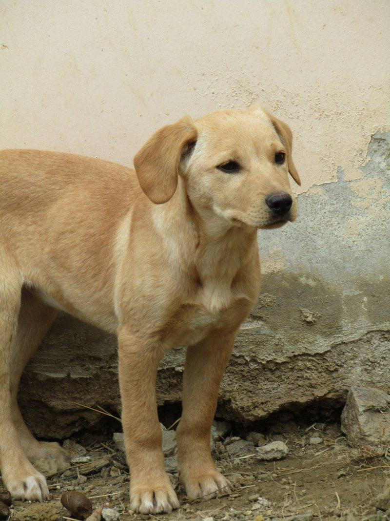 Bildertagebuch -  Belle:  junges,  aufgeschlossenes, hübsches Hundemädchen sucht aktive Familie! - in Griechenland ZUHAUSE GEFUNDEN! 25122588df