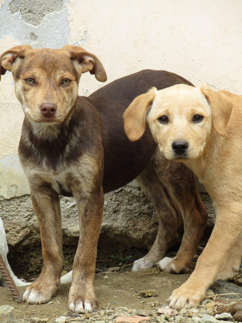 Bildertagebuch -  Belle:  junges,  aufgeschlossenes, hübsches Hundemädchen sucht aktive Familie! - in Griechenland ZUHAUSE GEFUNDEN! 25122589ab