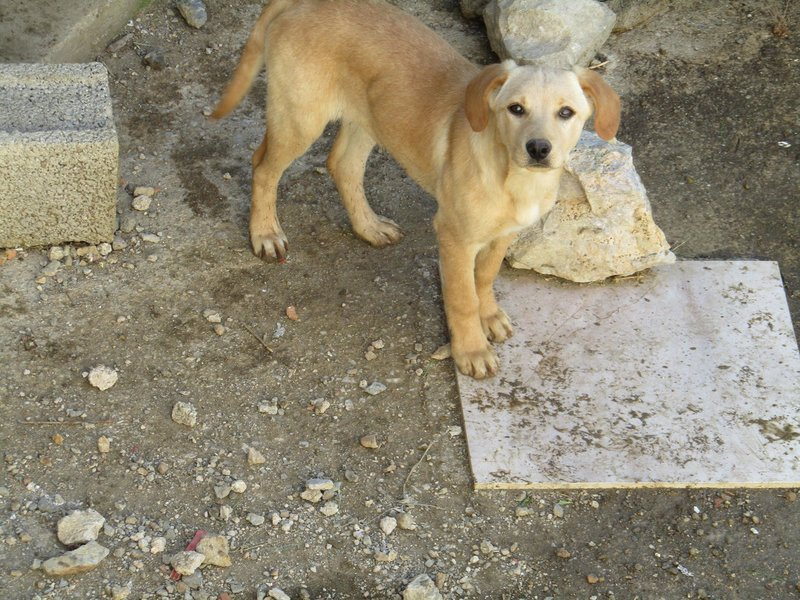 Bildertagebuch -  Belle:  junges,  aufgeschlossenes, hübsches Hundemädchen sucht aktive Familie! - in Griechenland ZUHAUSE GEFUNDEN! 25122590wx