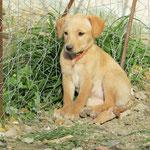 Bildertagebuch -  Belle:  junges,  aufgeschlossenes, hübsches Hundemädchen sucht aktive Familie! - in Griechenland ZUHAUSE GEFUNDEN! 25122591me