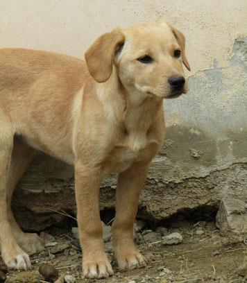 Bildertagebuch -  Belle:  junges,  aufgeschlossenes, hübsches Hundemädchen sucht aktive Familie! - in Griechenland ZUHAUSE GEFUNDEN! 25122594ow