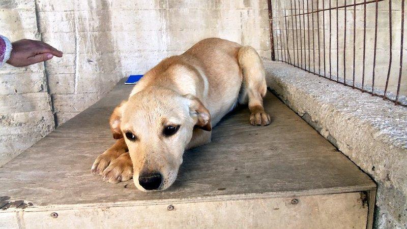 Bildertagebuch -  Belle:  junges,  aufgeschlossenes, hübsches Hundemädchen sucht aktive Familie! - in Griechenland ZUHAUSE GEFUNDEN! 25122595vb