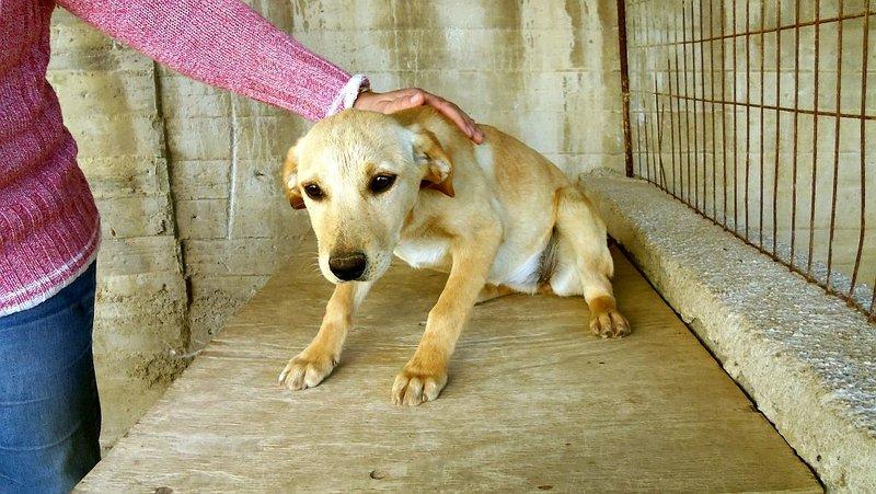 Bildertagebuch -  Belle:  junges,  aufgeschlossenes, hübsches Hundemädchen sucht aktive Familie! - in Griechenland ZUHAUSE GEFUNDEN! 25122596zl