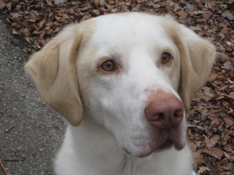 Bildertagebuch - EWALD (nun Jonne), besonderer Hund sucht besondere Menschen...VERMITTELT! 25178917cl