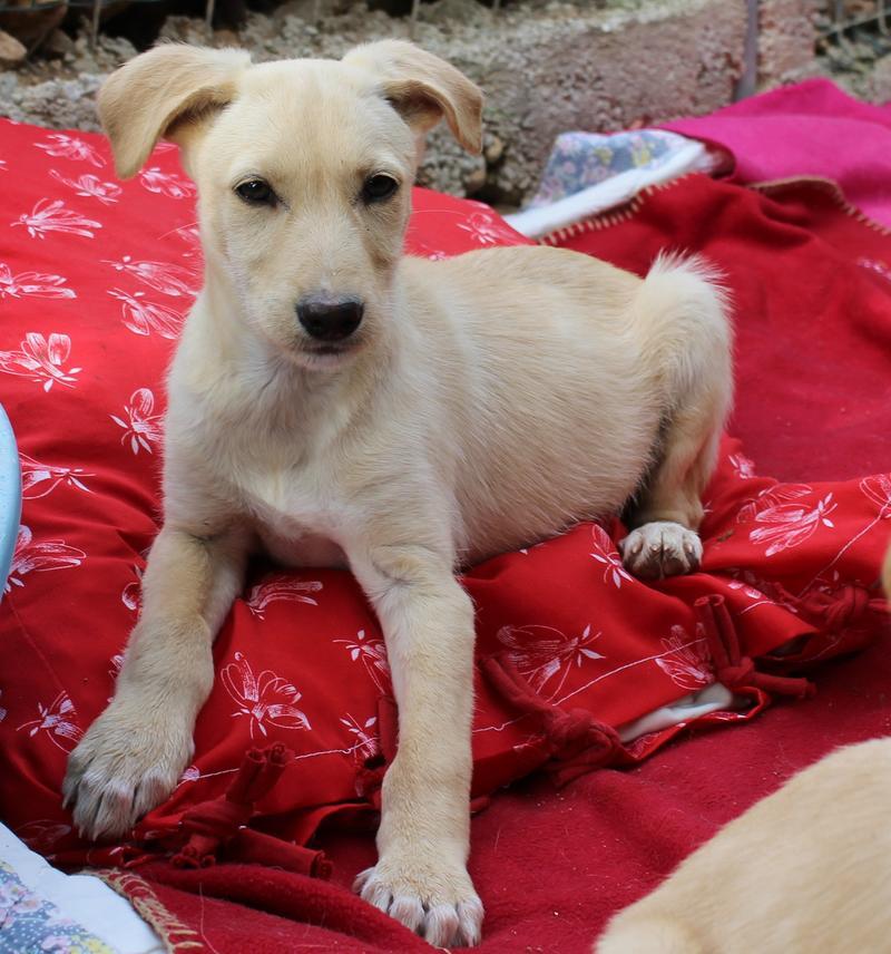 Bildertagebuch -  Kenia: pfiffiges Hunde-Mädel sucht konsequente, liebe und  souveräne Familie! - VERMITTELT - 25281924sf