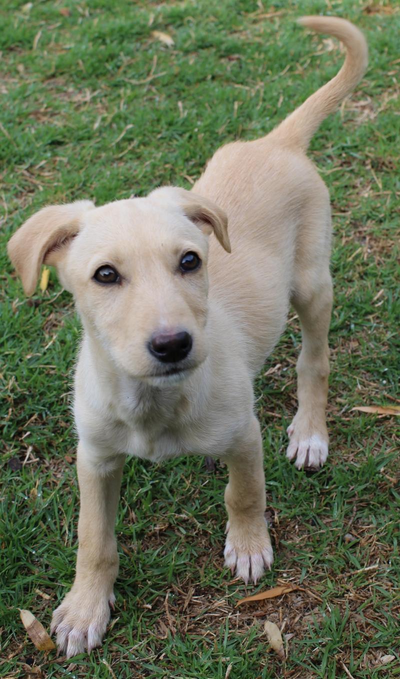 Bildertagebuch -  Kenia: pfiffiges Hunde-Mädel sucht konsequente, liebe und  souveräne Familie! - VERMITTELT - 25281925uu