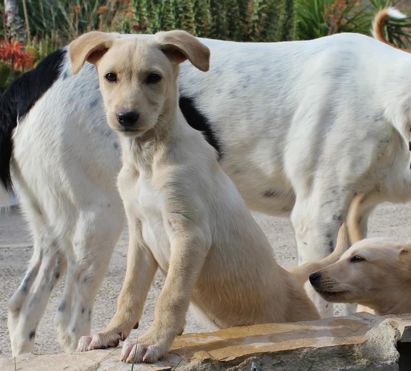 Bildertagebuch -  Kenia: pfiffiges Hunde-Mädel sucht konsequente, liebe und  souveräne Familie! - VERMITTELT - 25281927wx